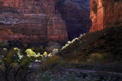 Zion Nat'l Park: Road to Sinawava