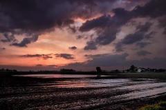 A Wet Spring Sunset